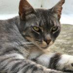 Skiatos Street Cats